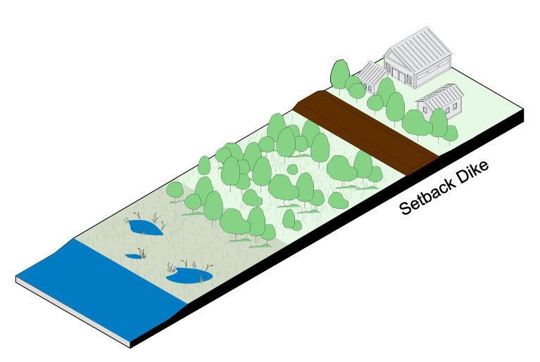Setback Dike: Wetlands, Forest and Park Land Use in Floodplain